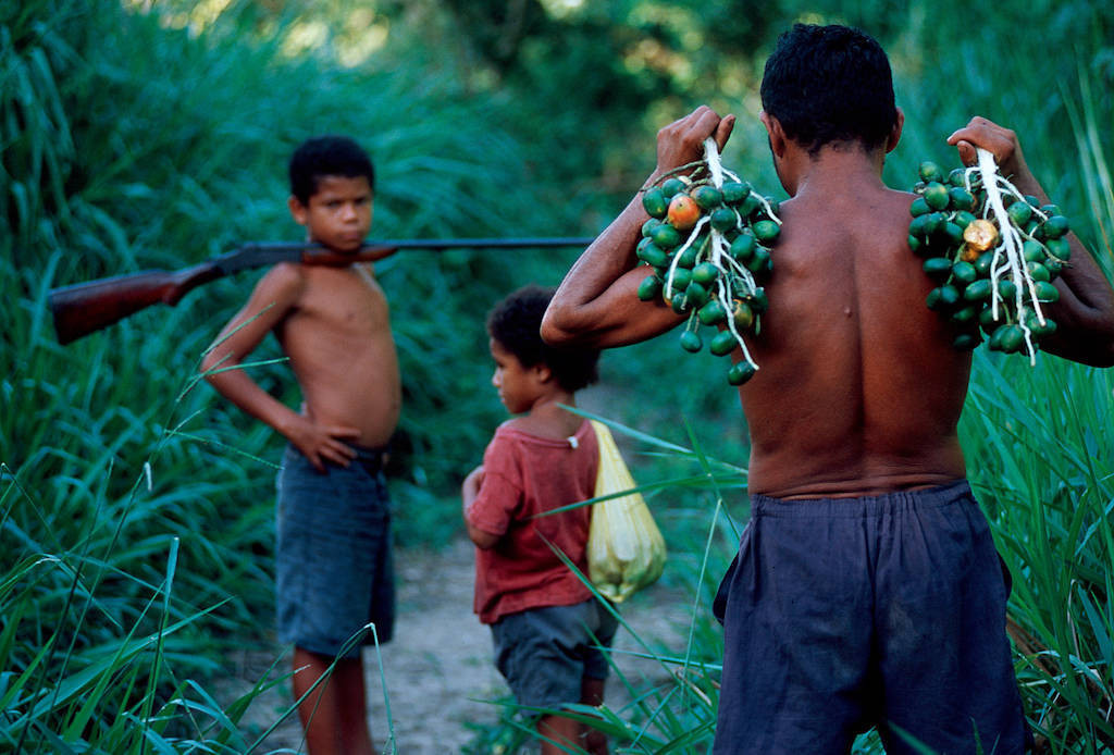 Photo: A local hunter/gatherer carries pupunha fruit he collected with his children in the forests of the Brazilian Amazon.