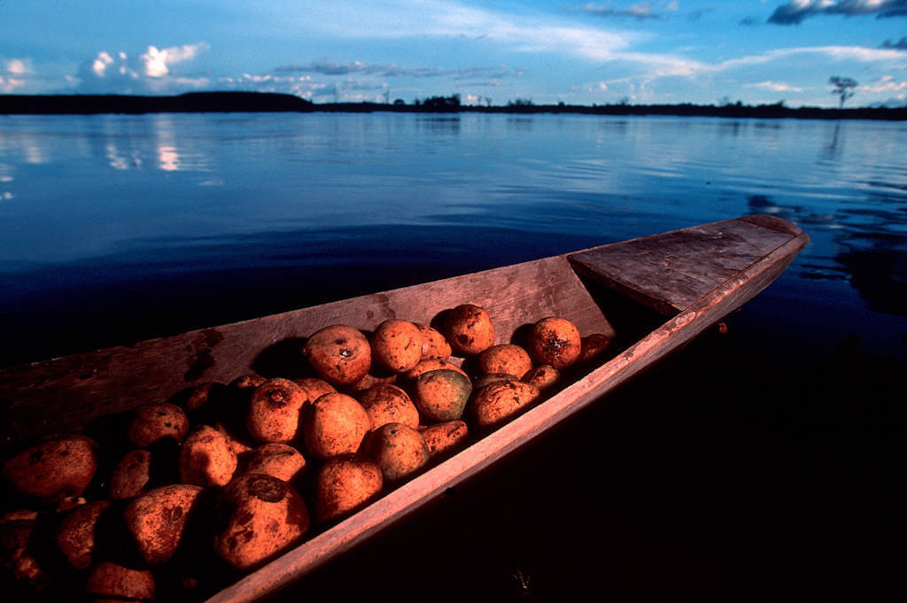 Photo: Forest fruits are moved by dugout canoe from the small village of Quiandeua to the bigger markets down river.