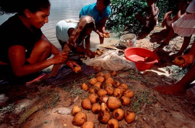 Photo: Forest fruit is cleaned and prepared for market along the Capim River, a tributary of the Brazilian Amazon.