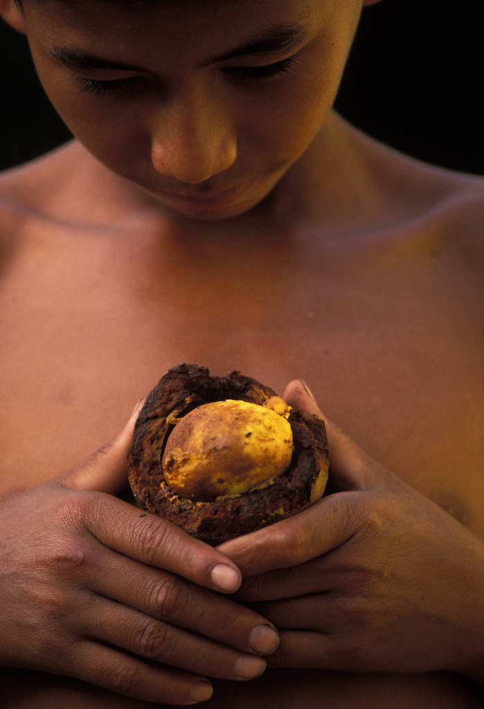 Photo: Jaime, a boy whose family saved their forest and harvests its fruit, holds up a piquia fruit.