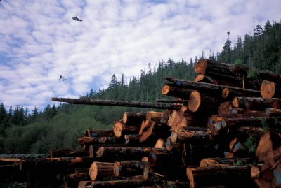 Photo: Helicopters are used to selectively log old-growth forest along Clayoquot Sound on Vancouver Island (British Columbia, Canada.)