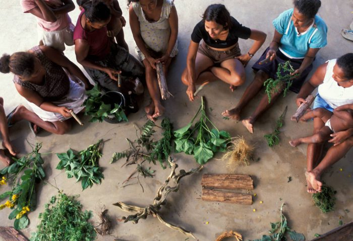 Photo: A medicinal plant workshop at the village of Quiandeua along the Capim river in the Brazilian Amazon.