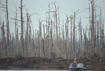 Photo: A fisherman among a stand of trees killed by saltwater intrusion in southern Louisiana.