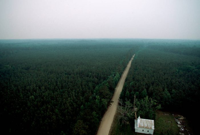 Photo: Roads and highways cut through the forests near Manteo, NC, where the endangered red wolf makes its home.