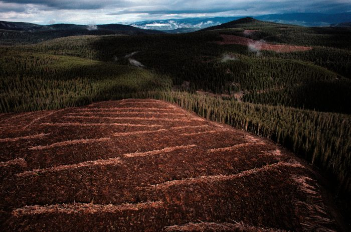 Photo: A clear-cut in Salmon National Forest, Idaho.