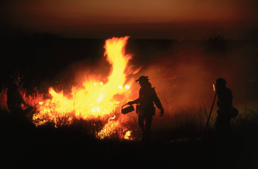 Photo: Managers at the Attwater Prairie Chicken NWR must use controlled fire to kill invasive woody species and keep the prairie healthy.