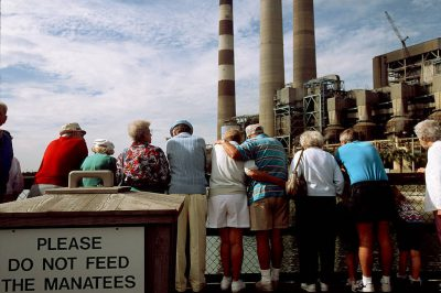 Photo: Tourists watch manatees in the shallow waters near a coal-fired power plant in Apollo Florida.