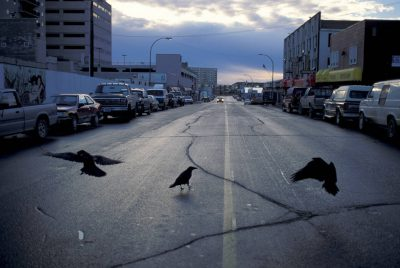 Photo: Ravens in the streets of Yellowknife, Canada, near a large diamond-mining area in the Northwest Territories.