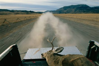 Photo: A mule deer in the back of a young hunter's pickup truck in Montana in the Rocky Mountain Front area.