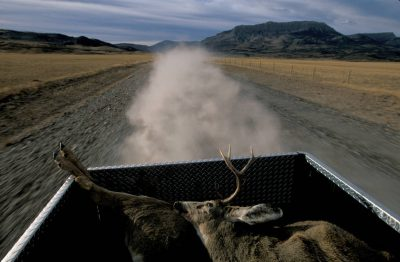 Photo: Mule deer in the back of a pickup truck signal a successful hunt along the Rocky Mountain Front in Montana.