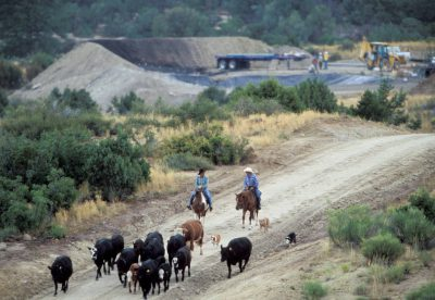 Photo: Ranchers move cattle through a compressor station on their Bureau of Land Management grazing allotment in Aztec, New Mexico.