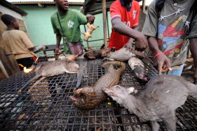 Men butcher and cook bushmeat, including a marsh cane rat (Thryonomys swinderianus), two tree pangolin (Phataginus tricuspis) and two brush-tailed porcupine (Atherurus africanus) and a blue duiker (Philantomba monticola), in a market in Malabo, Equatorial Guinea.
