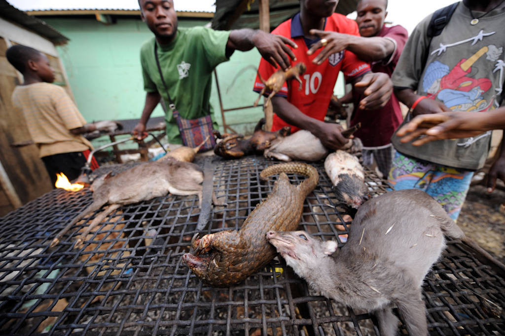 Men butcher and cook bushmeat, including a marsh cane rat (Thryonomys swinderianus), two tree pangolin (Phataginus tricuspis) and two brush-tailed porcupine (Atherurus africanus) and a blue duiker (Philantomba monticola melanorheus), in a market in Malabo, Equatorial Guinea.
