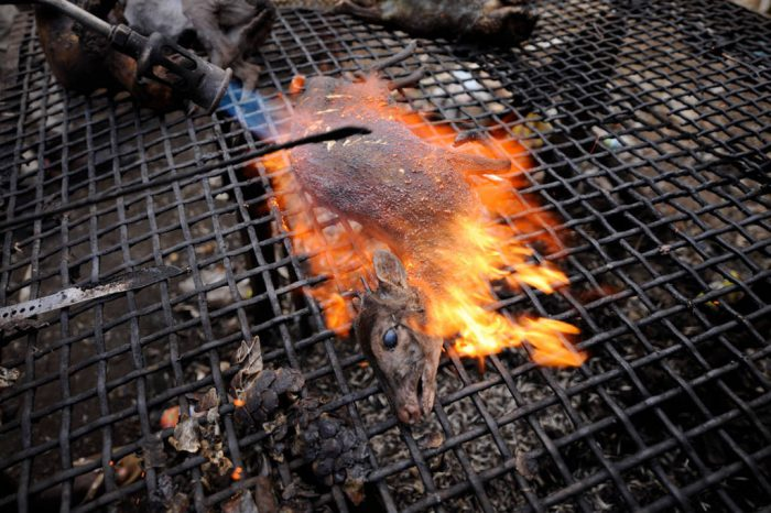A blue duiker (Cephalophus monticola melanorheus) cooked for the bushmeat trade in the market in Malabo, Equatorial Guinea, Africa. A torch is used to singe off the animal's hair.