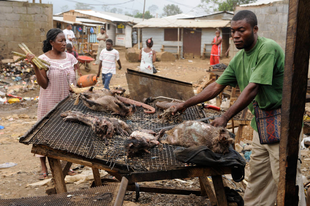 A man displays his butchered and cooked bush meat, including a marsh cane rat (Thryonomys swinderianus), tree pangolin (Phataginus tricuspis) and brush-tailed porcupine (Atherurus africanus), in a market in Malabo, Equatorial Guinea.