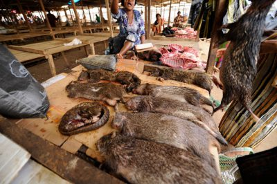 Photo: The main market in Malabo where bushmeat is sold.