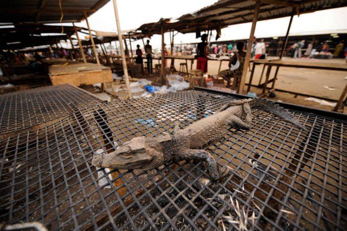 Photo: The main market in Malabo where bushmeat is sold.