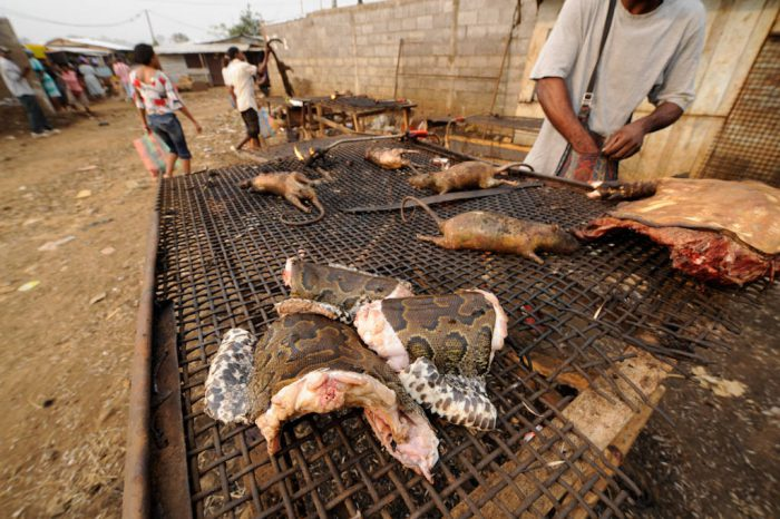 Photo: Men work at tables to burn the hide off of various bushmeat animals in the main market in Malabo.