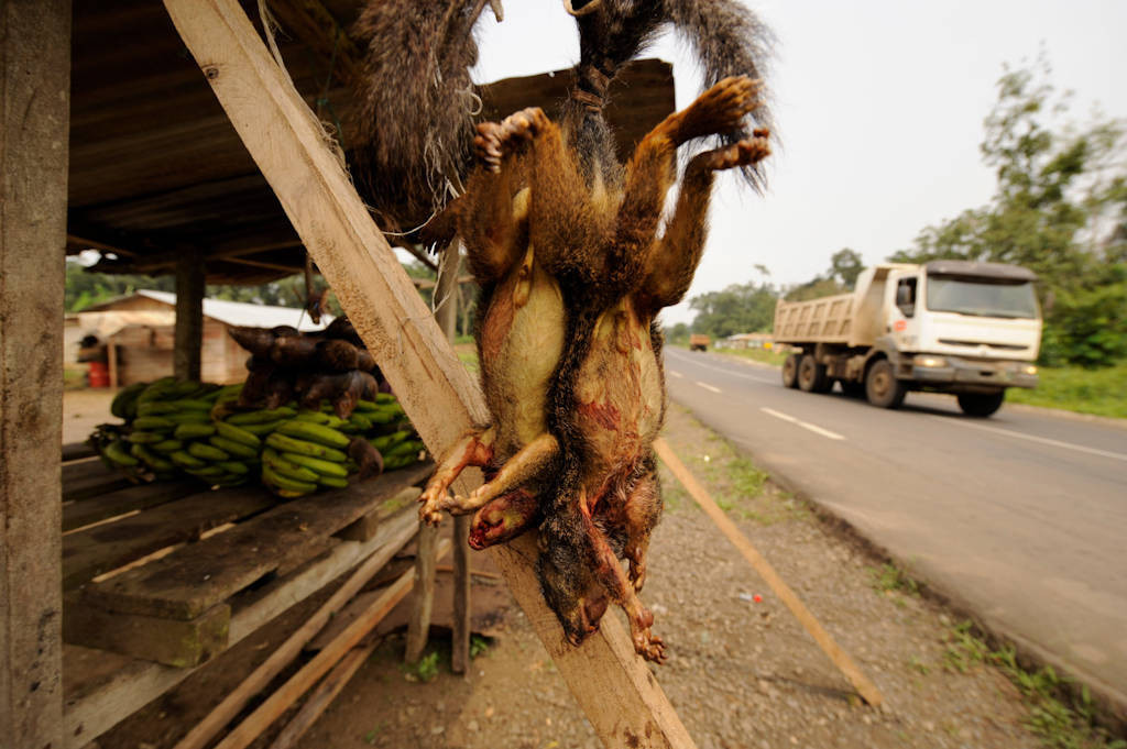 Photo: On the road to Moka, where some snails and squirrels are sold in roadside stands.
