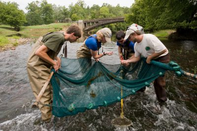 Photo: A crew from the Tennessee Aquarium Conservation Institute uses electro shocker nets to collect and survey declining freshwater species in the Conasauga River in Tennessee.