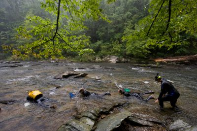 Biologists use wet suits and snorkels to look for the critically endangered (IUCN) and federally endangered smoky madtom (Noturus baileyi) in Abrams Creek.