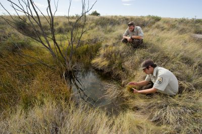 Two men look over a spring-fed pool containing Noel's amphipod at Bitter Lake National Wildlife Refuge.