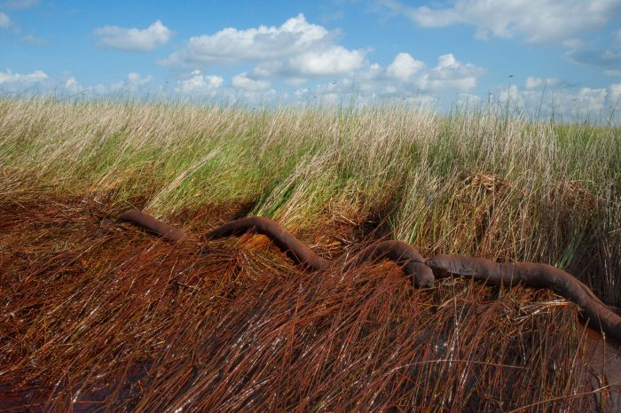 Photo: A failed boom lies washed up in a marsh, showing the effects of the Deepwater Horizon oil spill.