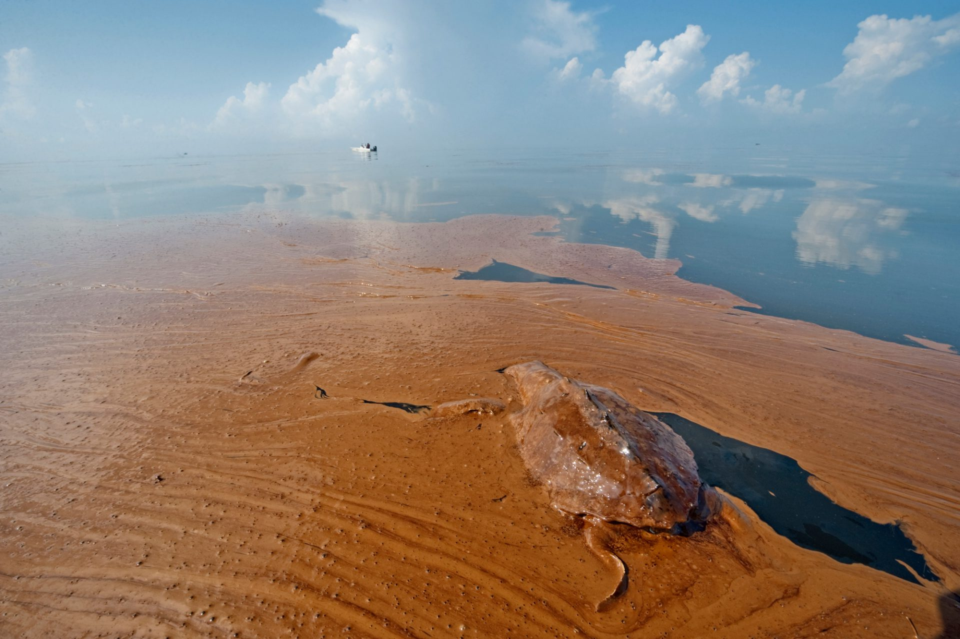 Photo: A dead sea turtle floating in an oil slick from the Deepwater Horizon spill, in Barataria Bay, Louisiana.