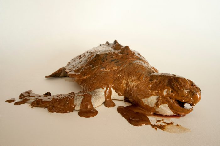 Photo: Portrait of a dead sea turtle, covered in oil from the Deepwater Horizon oil spill.