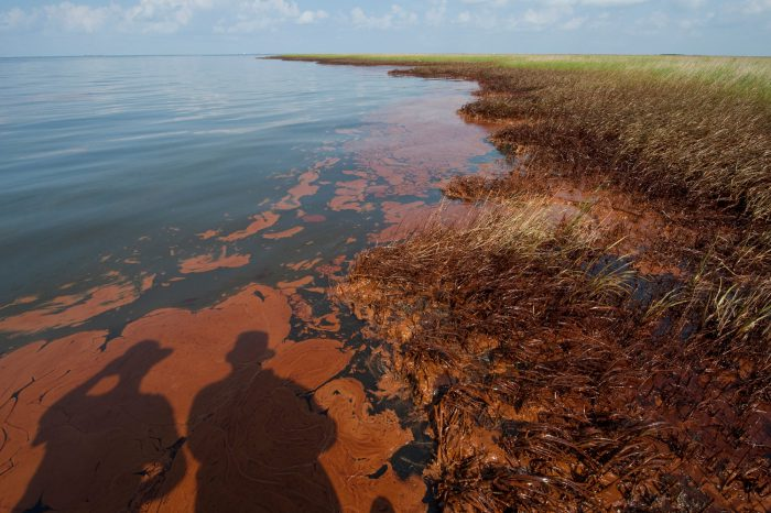 Photo: Massive amounts of oil from the Deepwater Horizon spill ring the outer edges of a marsh near the mouth of the Mississippi river in Louisiana.