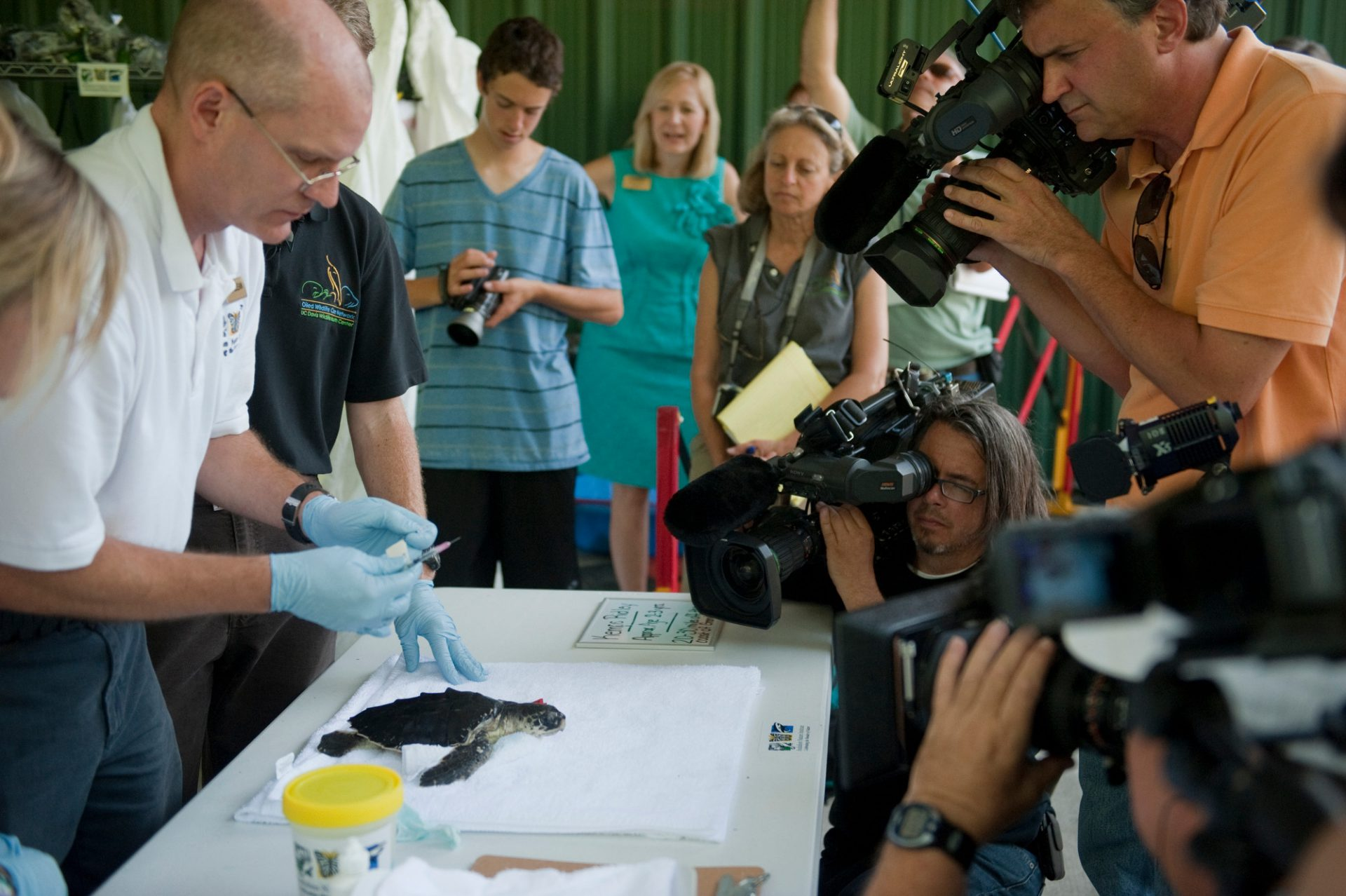 A media event which allowed the press to film three critically endangered (IUCN) and federally endangered Kemp's ridley sea turtles (Lepidochelys kempii) which have been brought into the Audubon Nature Institute near New Orleans, Louisiana, after exposure to oil from the Deepwater Horizon spill.