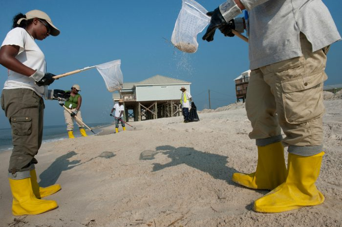 Photo: Workers sift through sand to separate the oil on the beaches of Dauphin Island, Alabama.