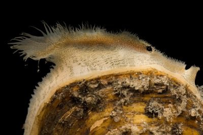 THE CLEVER BIVALVE