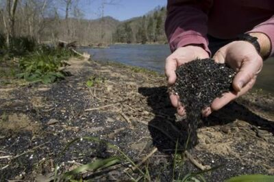 Photo: A mussel shows off coal fines, the sediments from Virginia's coal mines that wash into the rivers of Tennessee.