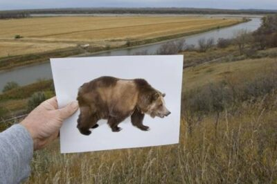 Photo: Lewis and Clark spotted their first grizzly bear at the place where the Heart River meets the Missouri River near Bismarck, ND. Today it serves as a corn field.