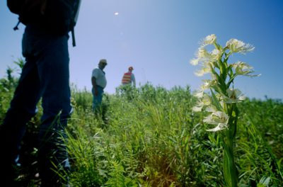 Photo: Before a highway is widened here, botanists are dispatched to instruct workers on how to safeguard the threatened western prairie fringed orchid.