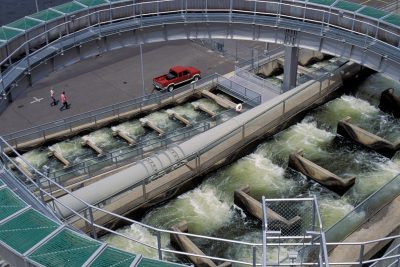 "Photo: A ""fish ladder,"" designed to move salmon smolts past dams on the Columbia River and out to sea."