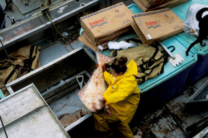 Photo: Commercial halibut fishing operation in Alaska's Pribilof Islands.