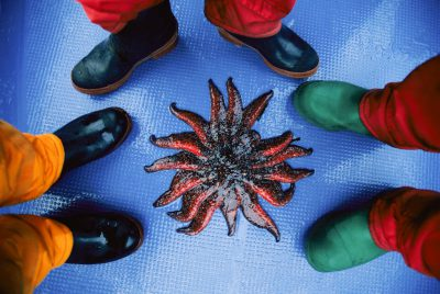 Photo: A sunflower starfish surrounded by boots on the floor of a boat moving through Clayoquot Sound, near Vancouver Island, British Columbia.