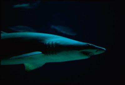 Photo: A shark swims at the aquarium at the Henry Doorly Zoo in Omaha, NE.