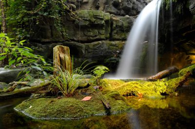 Photo: A waterfall at the Tennessee Aquarium.