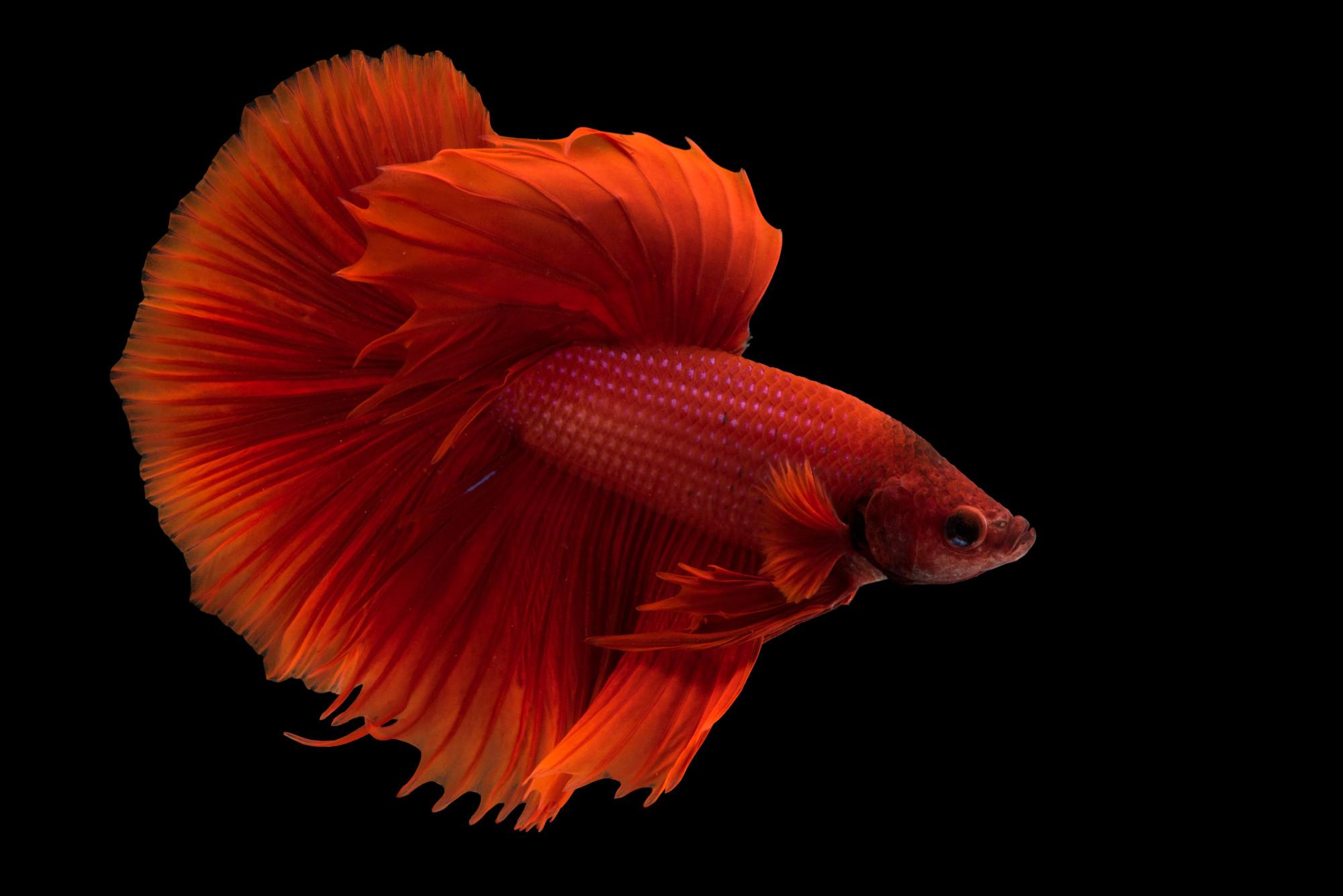 Fis011 00706 joel sartore for Fish store lincoln ne