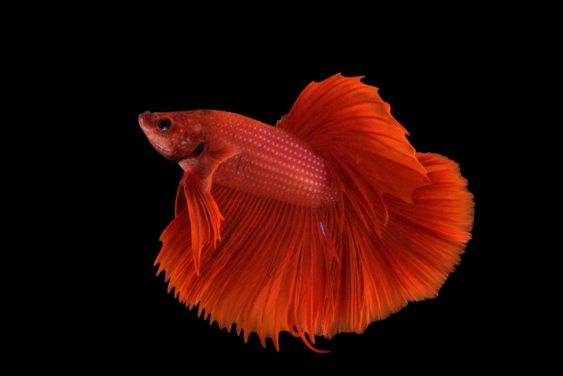 Fis011 00707 joel sartore for Fish store lincoln ne