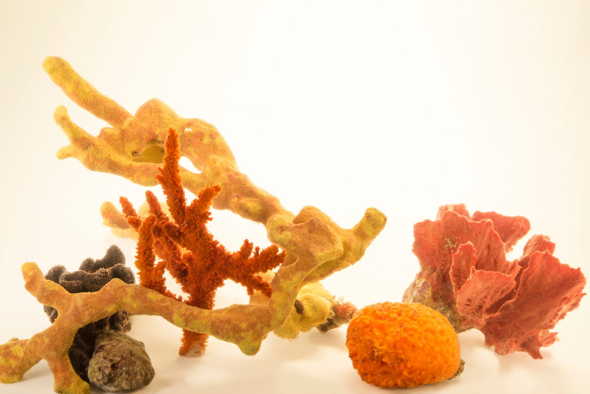 Photo: Sponges at Gulf Specimen Marine Lab and Aquarium.