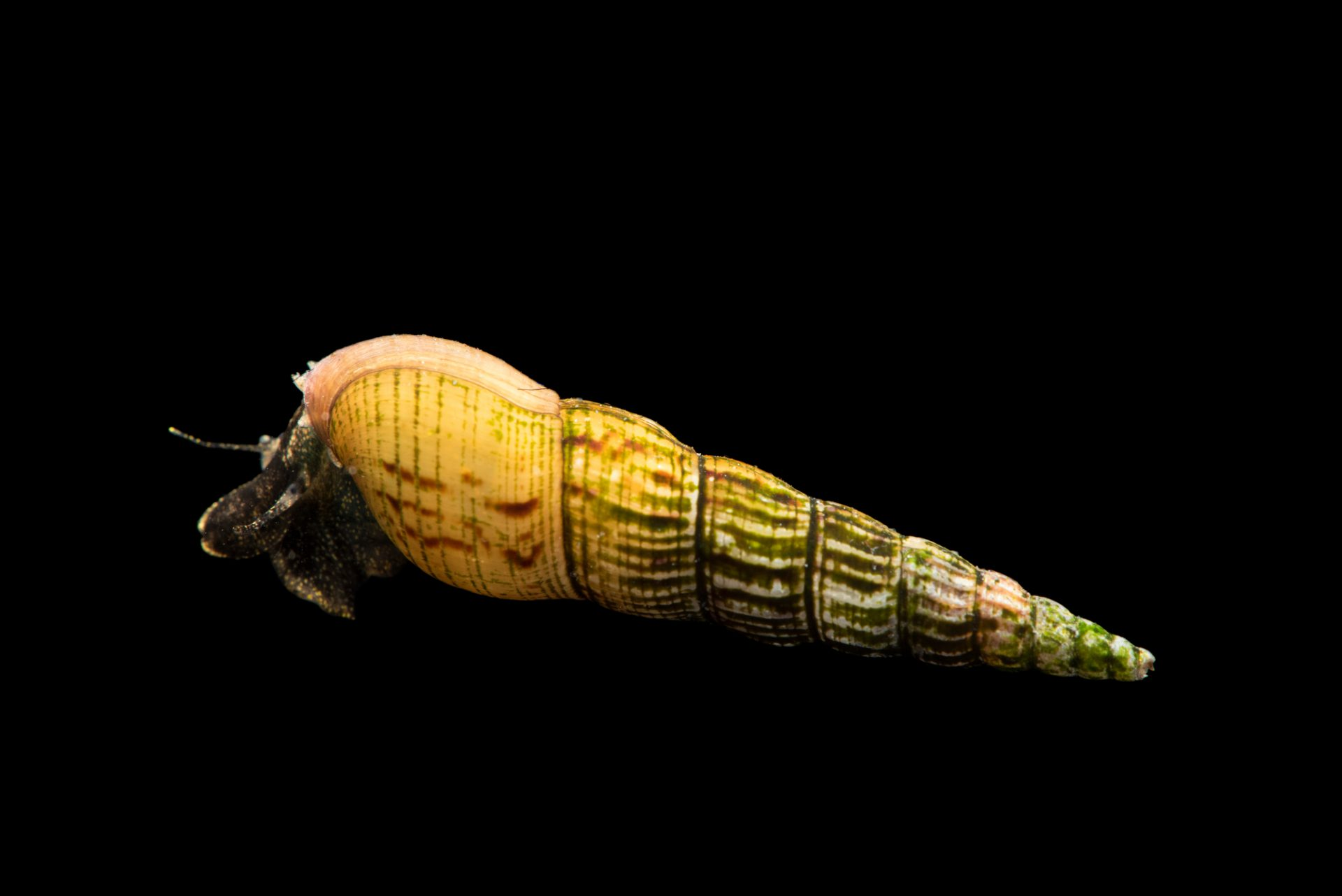 Photo: Snails at the Arizona-Sonora Desert Museum in Tucson, AZ.