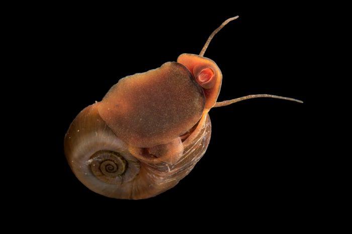 Photo: Snails at the Arizona Sonora Desert Museum in Tucson, AZ.