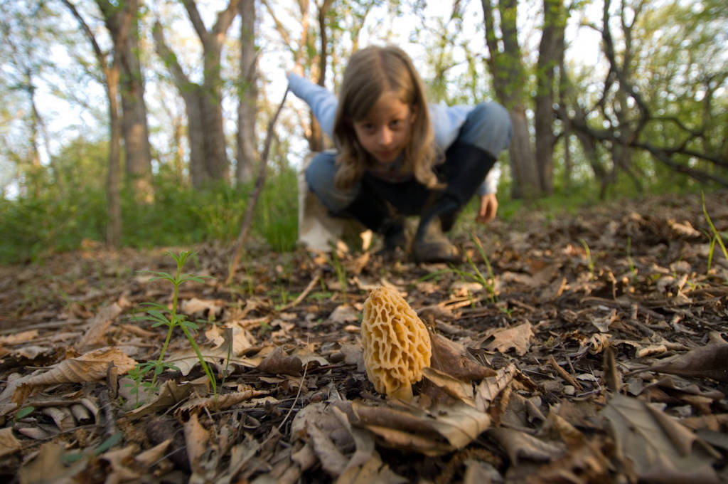 Photo: A young girl finds a morel mushroom on the forest floor.