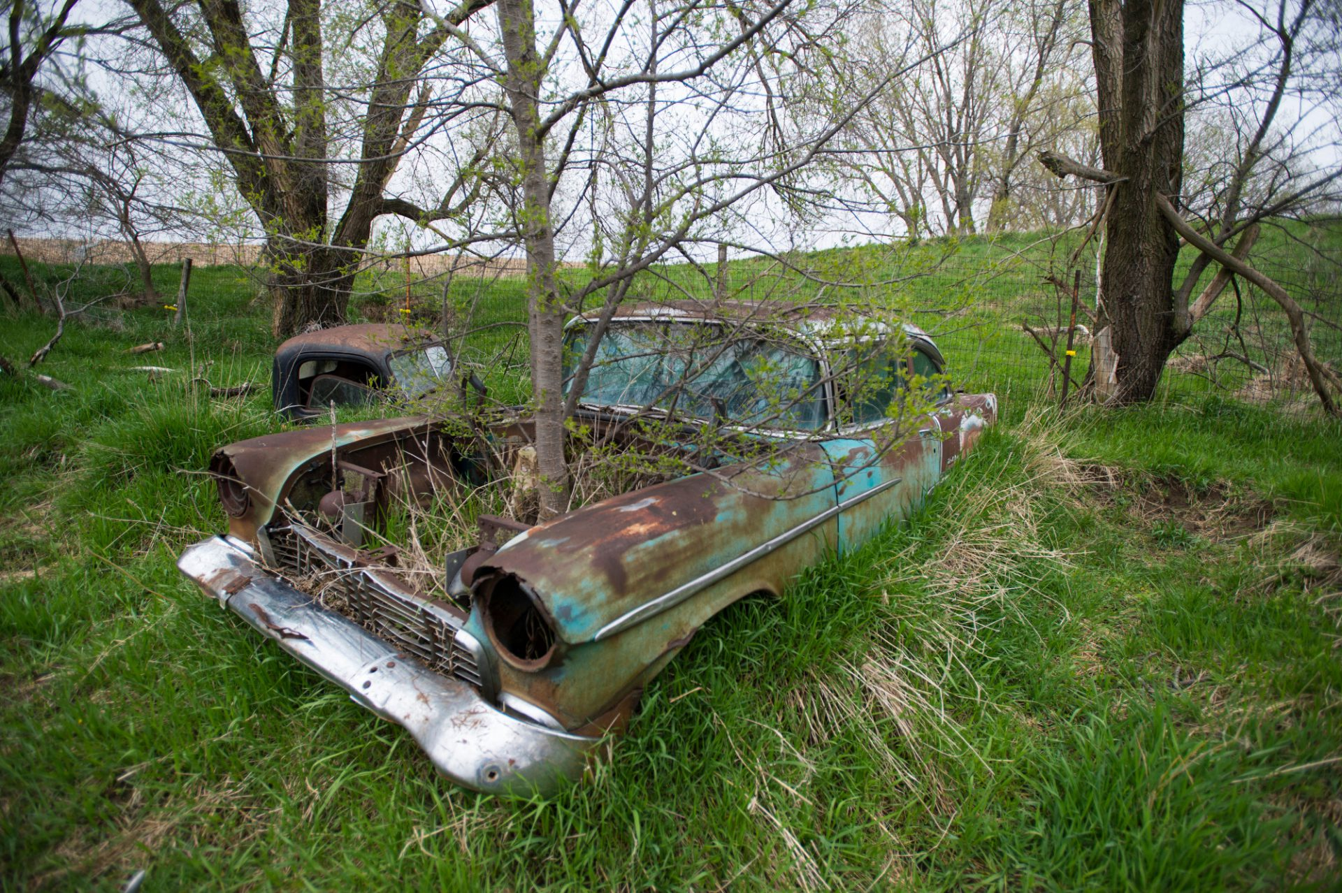Photo: A tree growing through an old car.