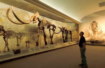 Photo: 'Archie,' the world's largest mammoth skeleton.