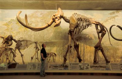 'Archie,' the world's largest mammoth skeleton. On display at Morrill Hall, University of Nebraska's State Museum in Lincoln, Nebraska.